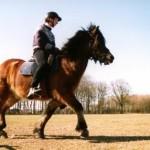paardmetmens